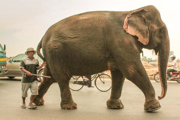 Rush Hour and the Elephant