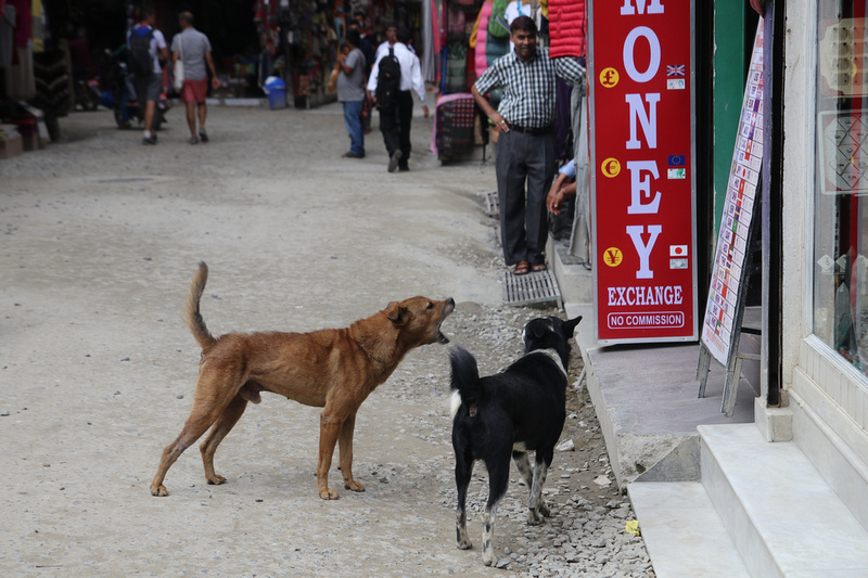 How to deal with stray street dogs in Nepal