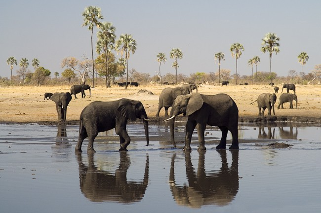 Why you Should book Zimbabwe as your Next African Safari Holiday