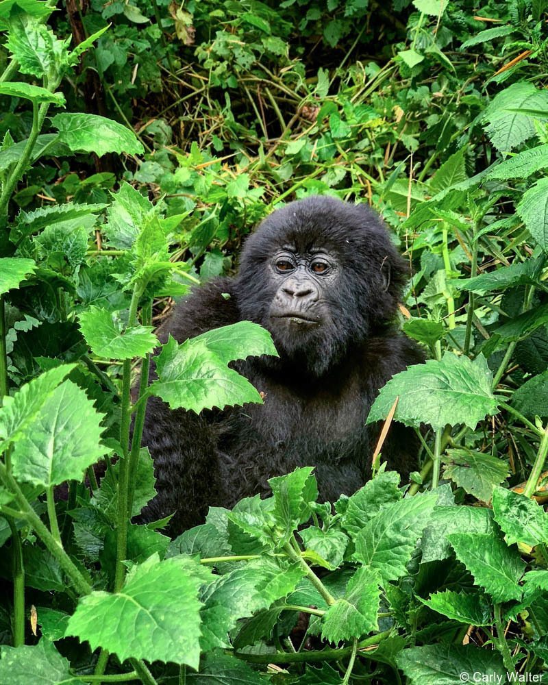 Just Back: Rwanda and its National Parks