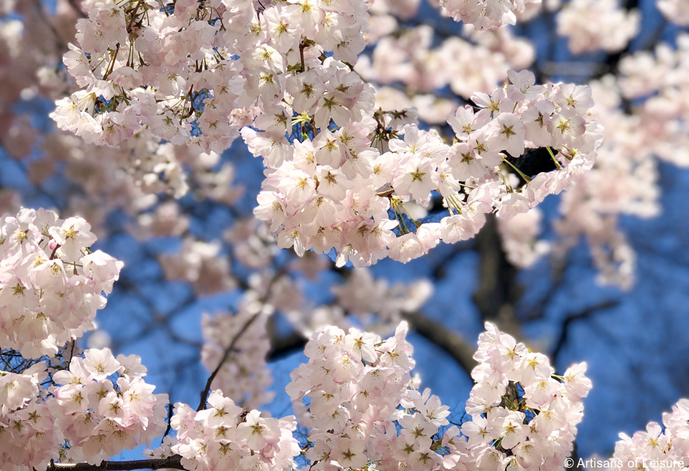 Fun, Colorful, Festive Food During Cherry Blossom Season in Japan