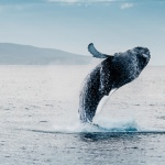 Best spots for a whale watching trip in the U.S.
